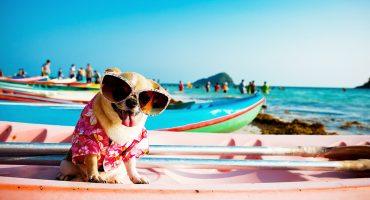 Sjekkliste for deg og hunden til ferien