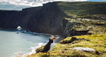 En innfødts guide til Island: 5 steder du ikke må gå glipp av